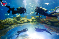 Scuba Diving in Ocean Park's Grand Aquarium